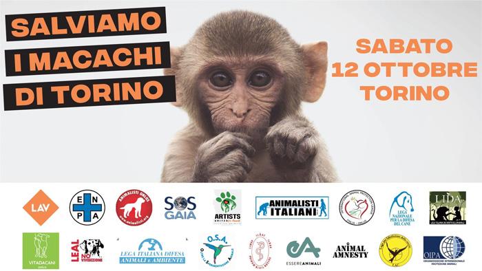 ARTISTS UNITED FOR ANIMALS -CORTEO PER SALVARE I MACACHI DI TORINO - Sabato 12 ottobre 2019Partenza ore 15 dalla Stazione di Porta Susa, Piazza XVIII Dicembre, Torino