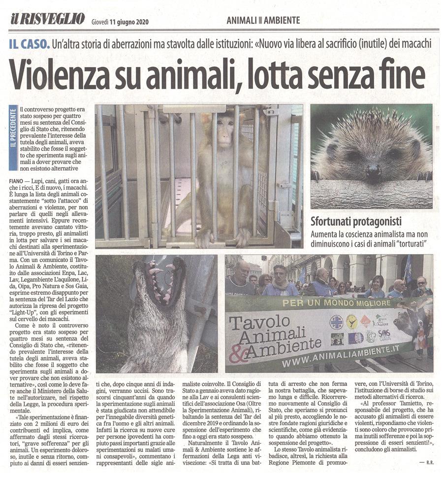 il-risveglio-11-06-2020-violenza-sugli-animali